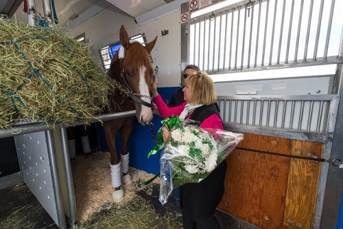 Islip Town Supervisor Angie Carpenter meeting with and presenting a bouquet of flowers to Justify the racehorse